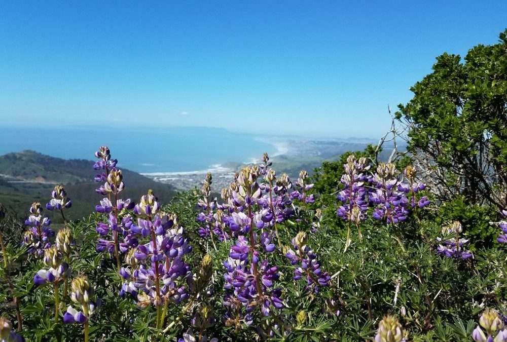 Ten curated hikes in the bay area